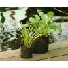 Waterplantzakje Rond