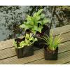 Waterplantzakje Vierkant