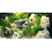 HighLine Aquarium 300 Decor Eiken